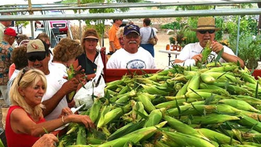 Arizona sweet corn festival, sweet corn, Mortimer farms, sweet corn Mortimer farms, AZ corn
