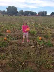 pumpkin patch, picking pumpkins, pumpkin