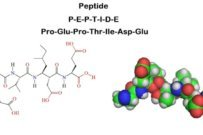All About Peptides