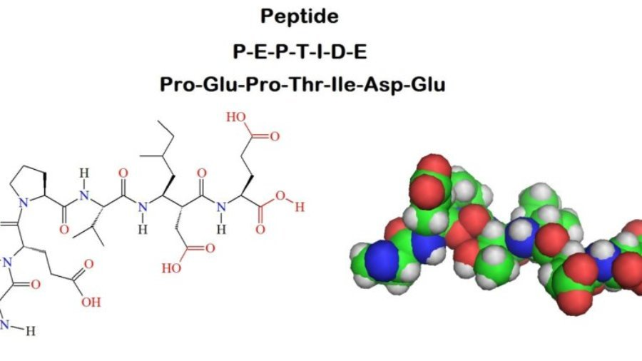 peptide, proteins, bodybuidling, fitness, nutrition